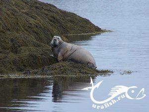 северная живность))) http://urafish.ru